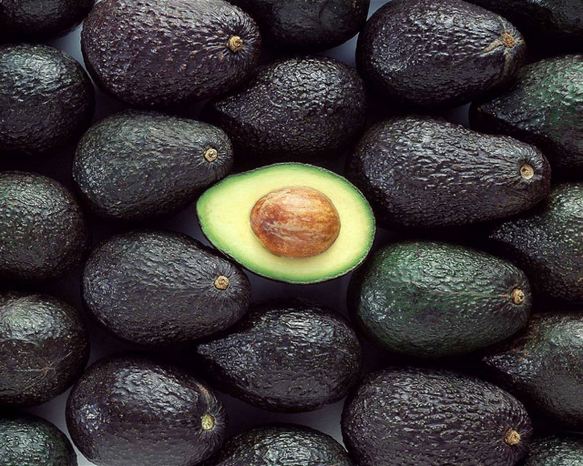 Organic Avocado Plantation expects high returns and low risk
