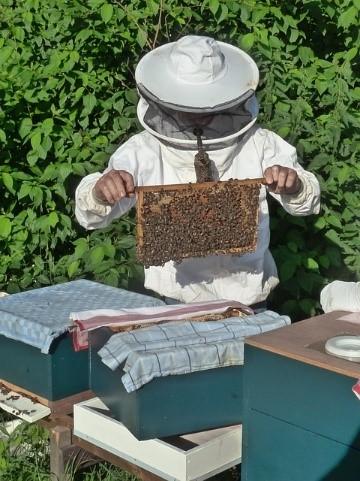 Bee Keeping in Belize