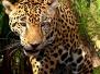 Belize Wildlife