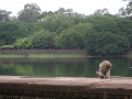A monkey grooms himself by the moat at Angkor Wat, Cambodia.