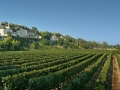 A vineyard in France.