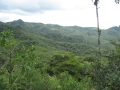 Dense bush covers Panama's mountainous regions.