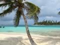 A palm tree sways on the white sand beaches of the San Blas Islands, Panama.