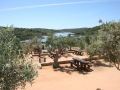 Picnic tables among olive trees in Portugal.