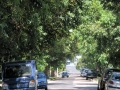 The wide tree-lined streets of Uruguay.