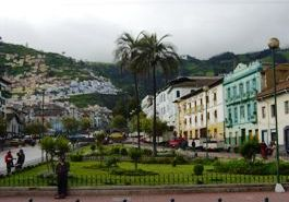 Quito Street with a palm tree and bright buildings