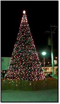 San Pedro Town's Christmas Tree