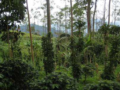 investing in coffee farms in Colombia