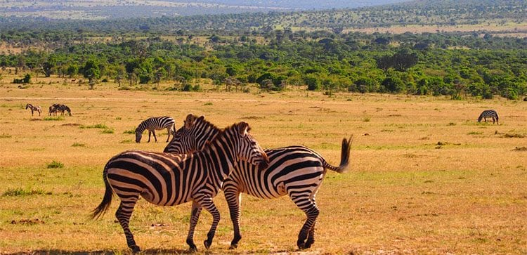 Travel to Nairobi Kenya and discover the best of Africa, we recommend the safaris!