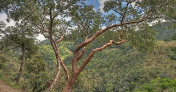 GringoTree Is a staple resource for the retiree in Ecuador, specifically in Cuenca.