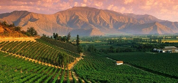 A view of the majestic vineyards and mountains famous to Argentina.
