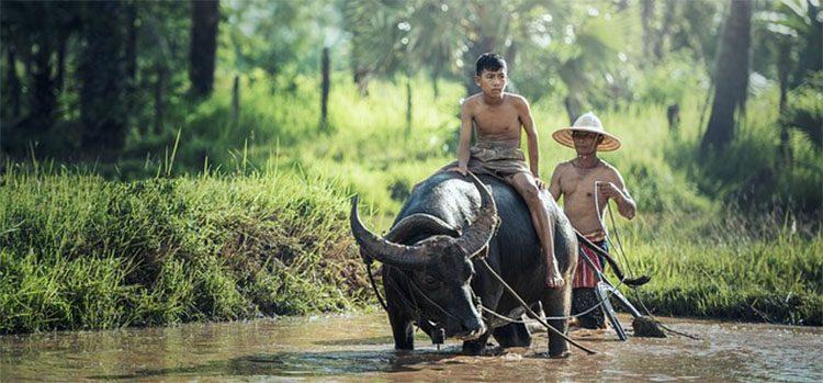 Boy Riding a Buffalo in the river in Cambodia