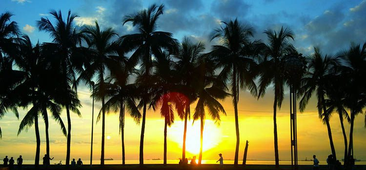 Silhouettes of palm trees in Roxas Boulevard in Manila Philippines