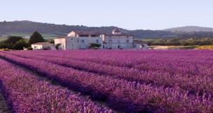 Lavender field, France