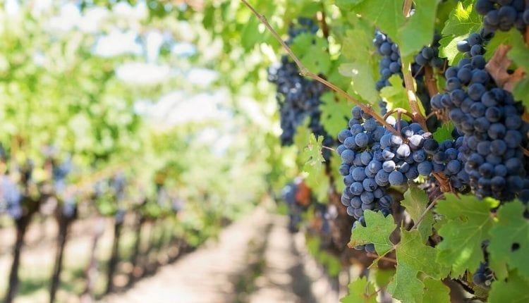 French Wine Futures