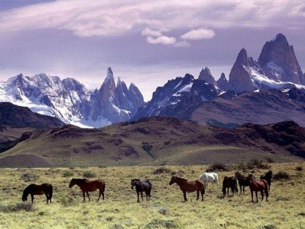 Argentina horses