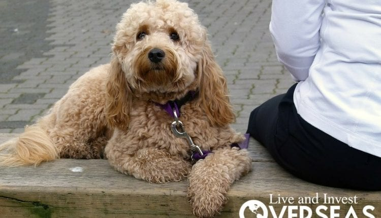 Pet Restrictions And Leash Laws Overseas