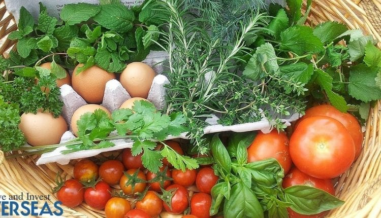 Learning Self-Suffiency Through Growing Vegetables