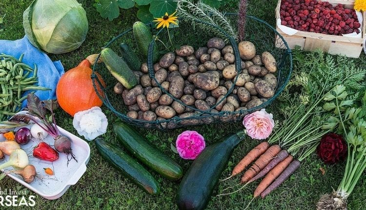 Self-sufficiency through growing a vegetable garden
