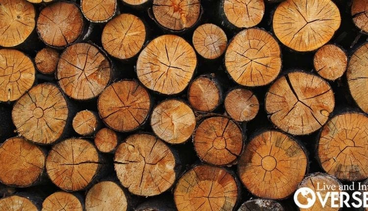 timber investment in colombia