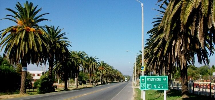 A well maintained, palm tree lined street leading to Montevideo, Uruguay.