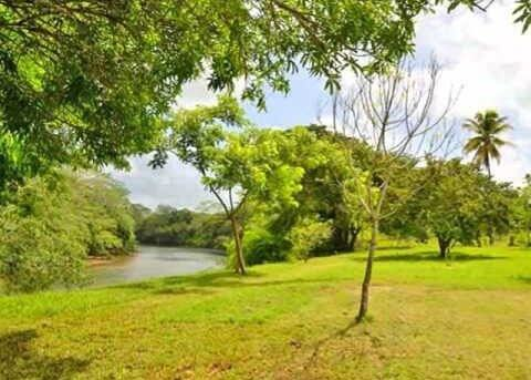 land in belize. stream and trees