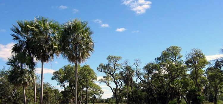 a blue sky day in Paraguay with lush trees in the foreground.