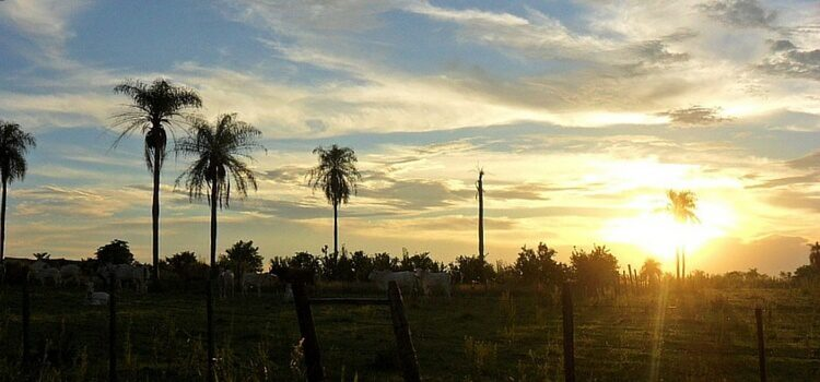 A farm investment in Paraguay, with cows, palm trees, and the bright orange sun in the distance.