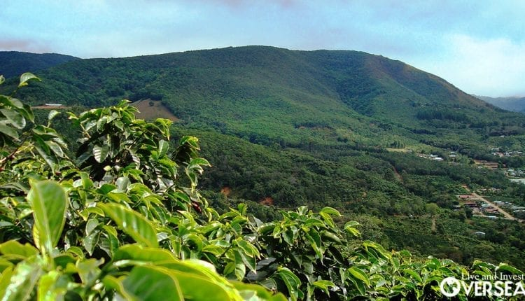 Havinf your own coffee farm overseas, you can have your own production and make a living in the best spots for coffee growing in the world.