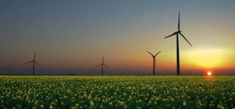 A wind farm in Uruguay with a green field in front and the sunset in the back.