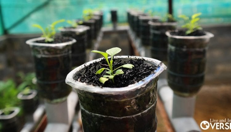 a hidroponics garden can be the key to greatly Improve Your Self-Sufficiency.