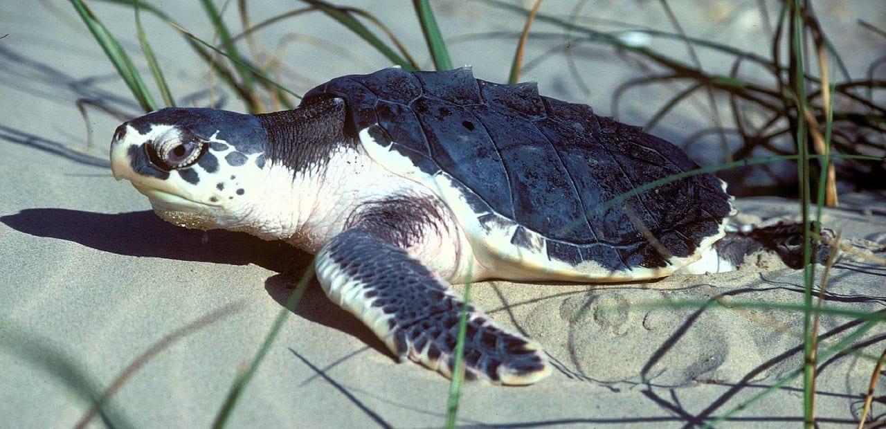 turtle-701660_1280-edited