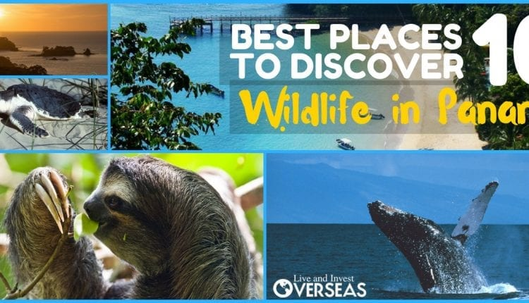 10 Best Places To Walk On The Wildlife in Panama Style