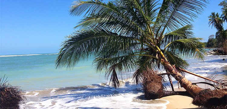 A crooked palm tree on a white sand beach