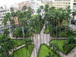 A Plaza in Cali with tall palm trees and grass patches