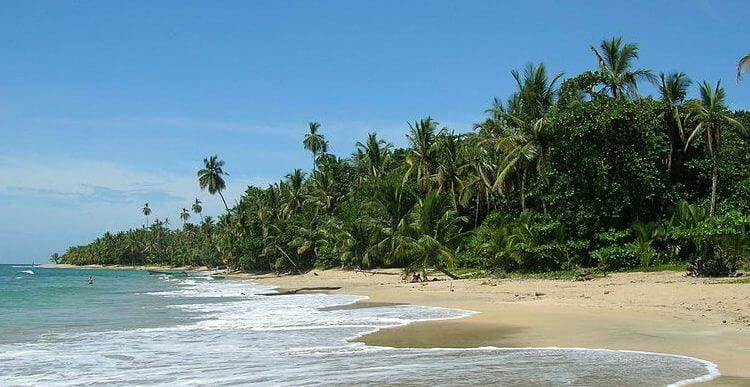 A calm beach with lots of palm trees and greenery
