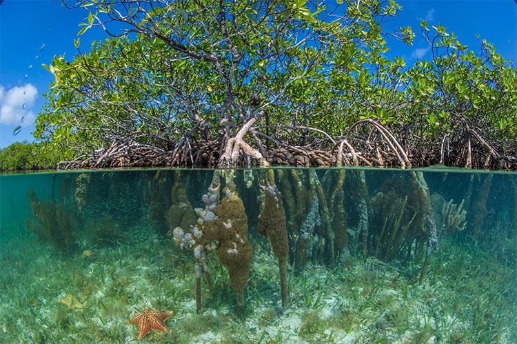 trees up top and roots underneath clear ocean water