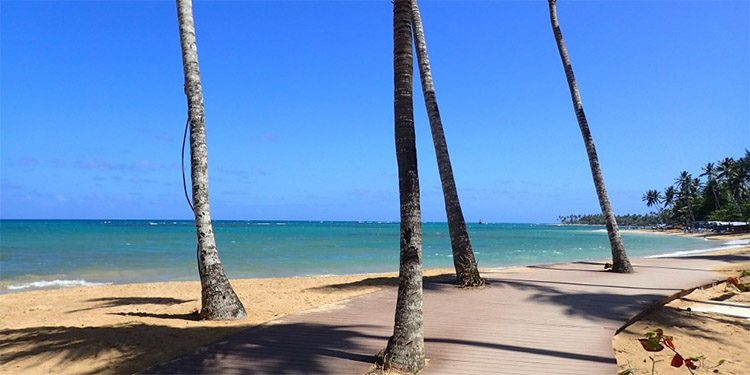 Thin palm tree trunks on a white sand beach in Las terrenas