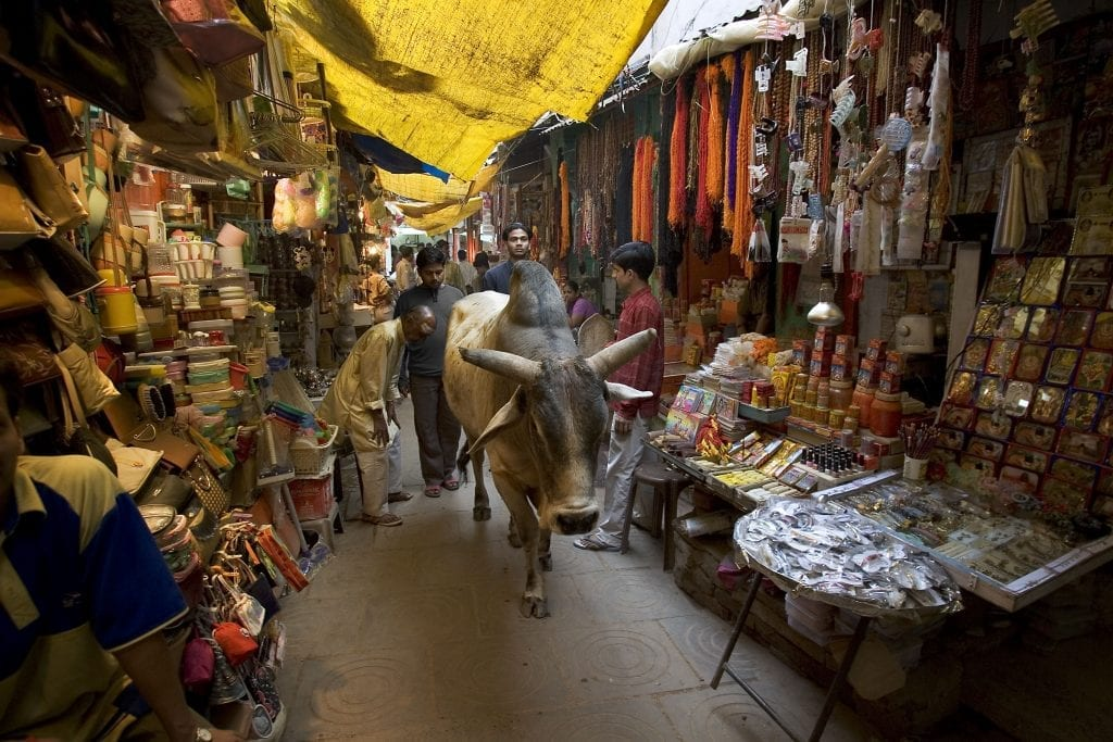 a cow walking through a market in india