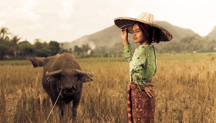 an Indonesian woman with a buffalo in a field