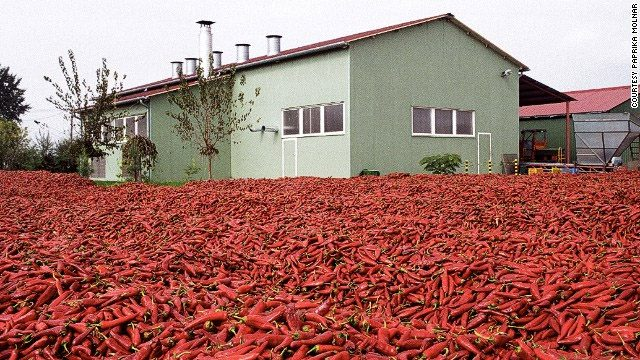 peppers drying outside a paprika factory
