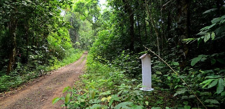 dirt road on parque nacional soberania, cutting through jungle plants and trees, butterlfy trap on the side of the road