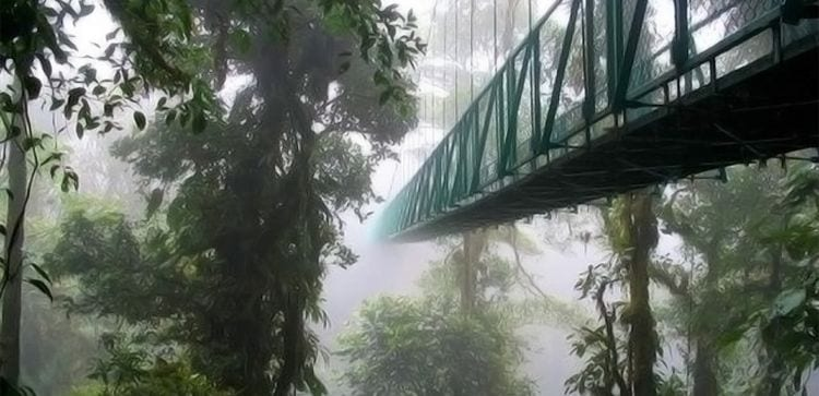 suspension bridge in the misty jungle