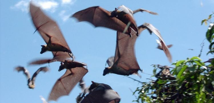 close up of bats flying overhead on a sunny day