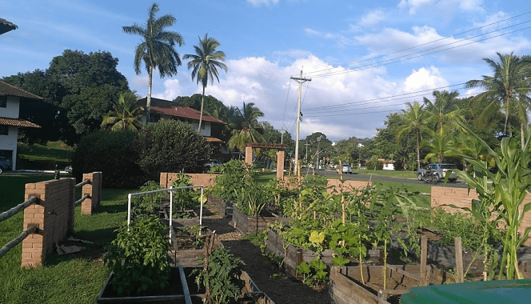 A garden in Clayton symbolizes the potential of urban farming in Panama City