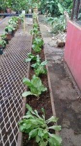 Urban Gardening Article 11