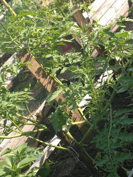 Urban Gardening Article 13