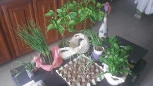 urban gardening article 17