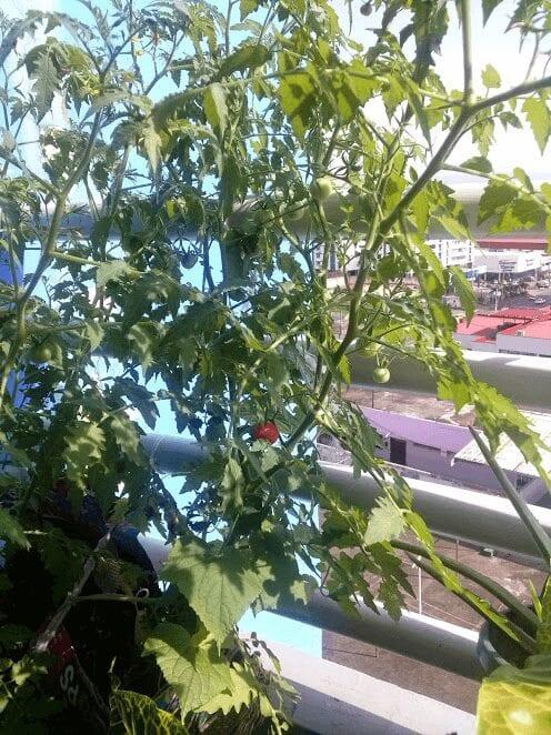 Urban Gardening Article 3