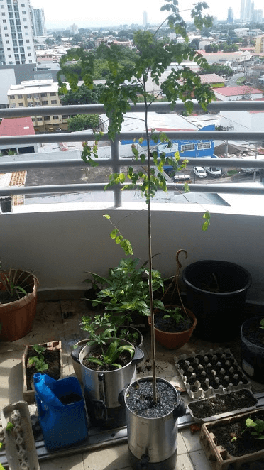 Urban Gardening Article 5